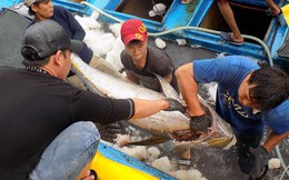 Thẻ vàng IUU làm giảm tăng trưởng xuất khẩu hải sản