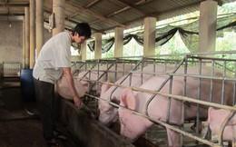 Lợn nội dư thừa, vẫn nhập trên 3.263 tấn thịt lợn ngoại mỗi tháng
