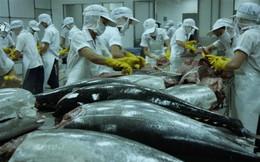 """Vướng """"thẻ vàng"""", xuất khẩu cá ngừ EU vẫn tiếp tục tăng trưởng"""