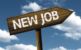 Lời khuyên đáng suy ngẫm mà chuyên gia quản trị doanh nghiệp gửi tới người trẻ đang tìm việc làm