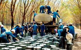 """Chiến tranh thương mại Mỹ - Trung: """"Đánh"""" cả vào xuất khẩu cao su Việt Nam"""