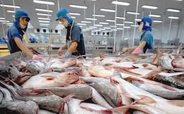 Mỹ -Trung xung đột thương mại, cá tra Việt Nam hưởng lợi cả hai thị trường