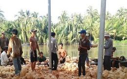 Giá dừa khô đồng bằng sông Cửu Long xuống thấp nhất 3 năm