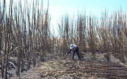 Gần 100ha mía ở Ia Piơr bị cháy rụi, thiệt hại hàng tỷ đồng