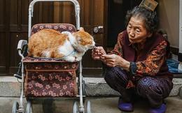 Bộ ảnh đầy cảm xúc của cụ bà Hàn Quốc: Tuổi già chẳng cần gì, chỉ cần một chú mèo béo bầu bạn thôi