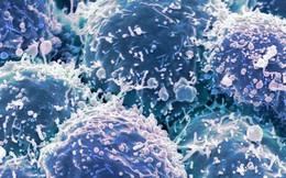 Chế tạo thành công loại virus chuyên diệt tế bào ung thư