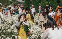 """Vườn cúc họa mi ở Hà Nội tiếp tục """"thất thủ"""": Đường vào tắc nghẽn, chụp một bức ảnh phải """"né"""" bao nhiêu người"""
