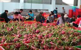 Hái rau, trái cây bán kiếm tỉ USD mỗi năm
