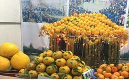 Quýt vàng Bắc Sơn - đặc sản có giá trị kinh tế cho nông dân Lạng Sơn