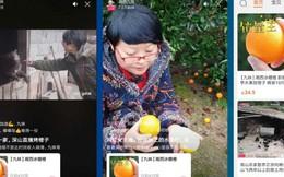 Nông dân Trung Quốc livestream, bán hết 1.000 tấn cam trong 13 ngày