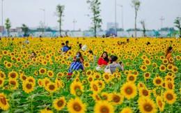 [VIDEO] Nườm nượp đi xem cánh đồng hoa hướng dương ven sông Sài Gòn