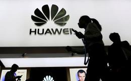 Bê bối gián điệp của Huawei ở Ba Lan: Kiến có thể giết chết voi