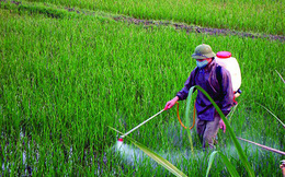 Sản lượng tiêu thụ giảm, Hóa chất Lâm Thao (LAS) hoàn thành được 72% kế hoạch LNTT năm 2018