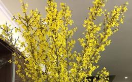 Mê mẩn cành hoa dại trời Tây, người Việt chi chục triệu mang về chơi Tết