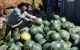 Trung Quốc tăng cường quản lý nguồn gốc trái cây nhập khẩu