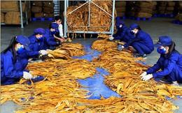 Hạn ngạch nhập khẩu thuốc lá nguyên liệu năm 2019 là gần 56.300 tấn