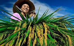 Gần 100 triệu người dân Việt Nam mới chỉ có 2,14 triệu tài khoản chứng khoán