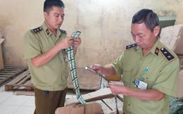 Chặn đứng hàng chục nghìn gói dầu gội Clear, Sunsilk nhập lậu từ Trung Quốc vào Việt Nam