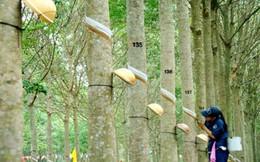 Tập đoàn cao su Việt Nam (GVR) đã nộp hồ sơ đăng ký niêm yết lên HoSE