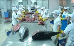 Xuất khẩu cá ngừ giảm 2,4% trong tháng 9, dự báo sẽ tiếp tục giảm những tháng cuối năm