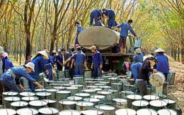 Tập đoàn Cao su Việt Nam (GVR): Quý 3 lãi hơn 1.219 cao gấp 2,5 lần cùng kỳ
