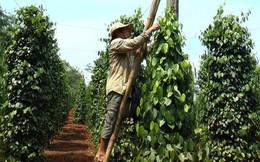 Nikkei: Việt Nam có tiềm năng trở thành trung tâm nông nghiệp Đông Nam Á