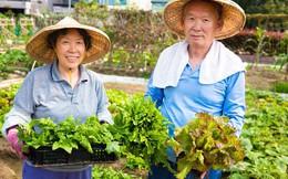 Thói quen ăn uống giúp người Nhật sống thọ nhất thế giới: Chỉ ăn no 8 phần, một ngày ăn 7 loại rau nhưng quan trọng nhất là giữ điều này!