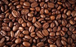 Kim ngạch xuất khẩu cà phê giảm hơn 20% trong 9 tháng đầu năm 2019