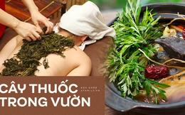 Cứ đau đầu khi giao mùa, nhiều người lại nhanh trí ăn ngay món rau này và tác dụng của loại rau đó còn ưu việt hơn thế!