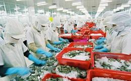 Xuất khẩu tôm Việt Nam sang Mỹ dự kiến tăng khoảng 5% trong quý cuối năm 2019