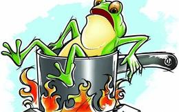 """Câu chuyện """"luộc ếch"""" và bài học nhớ đời về sự ổn định: Đừng quên rằng, cái gì cũng có giá của nó!"""