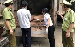 Không có tình trạng xuất lậu lợn sang Trung Quốc