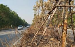Cây xanh Quốc lộ 18 bất ngờ bị đốt cháy, đơn vị quản lý nói gì?