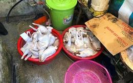Phát hiện hàng trăm kg nguyên liệu thực phẩm không rõ nguồn gốc tại Sơn La