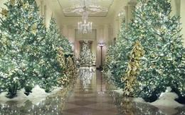 Ngành kinh doanh cây Giáng sinh sẽ hốt bạc nhờ sự biến đổi khí hậu?