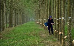 Cao su Đồng Phú (DPR) chuẩn bị tạm ứng cổ tức bằng tiền tỷ lệ 50%