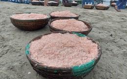 Ngư dân Đà Nẵng trúng mùa ruốc đầu năm, thu nhập bạc triệu mỗi ngày
