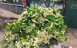 """Rằm tháng Giêng, hoa bưởi được nhiều người săn đón dù giá """"chát"""""""