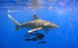 [TÔI MẤT TIỀN] Bơi theo cá mập, tôi đã mất tiền như thế nào?