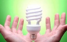 Bóng đèn Điện Quang (DQC) vừa chi trăm tỷ mua 3,7 triệu cổ phiếu quỹ