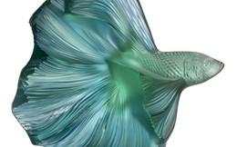 Bộ sưu tập lấy cảm hứng từ đại dương chinh phục giới thượng lưu và người yêu nghệ thuật chế tác pha lê trên toàn thế giới