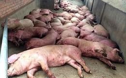 Dịch tả lợn châu Phi lây lan: Bộ NN kêu gọi đừng quay lưng với thịt lợn