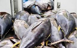 Xuất khẩu cá ngừ sang Trung Quốc tăng rất mạnh