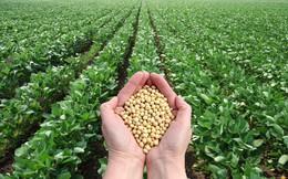 Cuộc chiến thương mại Mỹ - Trung ảnh hưởng ra sao tới ngành nông nghiệp Việt Nam và toàn cầu?