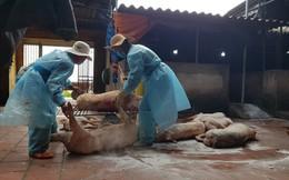 Bắc Giang: Lợn chết đầy sông tại... thượng nguồn