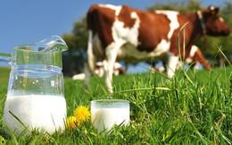 Thách thức gì cho cuộc chơi mới của các doanh nghiệp sữa Việt như TH True Milk ở thị trường 1,4 tỷ dân?