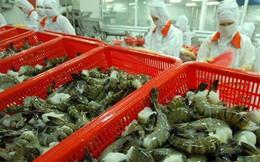 Bộ Công thương thông tin về việc nguyên đơn phía Mỹ yêu cầu điều tra hành vi lẩn tránh thuế đối với sản phẩm tôm xuất khẩu của Thủy sản Minh Phú