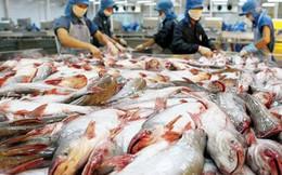 Cơ hội lớn xuất khẩu cá tra sang 10 nước CPTPP trong thời gian tới
