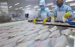 Xuất khẩu cá tra Việt Nam sang EU có dấu hiệu ấm dần
