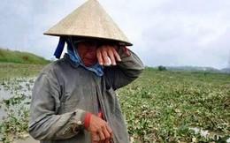 Chuyên gia nông nghiệp châu Á: EVFTA với nông nghiệp là câu chuyện của nhiều người, hãy công bằng hơn với nông dân Việt Nam!